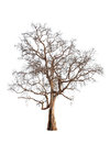 Old And Dead Tree Stock Image - 30232911