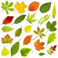 Tree Leaves Royalty Free Stock Image - 30233966