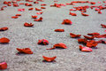 Red Rose Petals  Royalty Free Stock Photo - 30240365