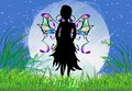 Night Butterfly Royalty Free Stock Image - 30256516