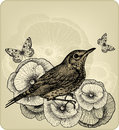 Background With Poppy Flowers And Bird Fieldfare,  Royalty Free Stock Photos - 30274598
