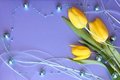 Tulips  Card -  Mothers Day Or  Easter Stock Photo Stock Photography - 30322482