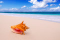 Conch Shell  On The Beach. Royalty Free Stock Images - 30354279