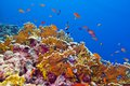 Coral Reef With Fire Coral And Exotic Fishes At The Bottom Of Tropical Sea Royalty Free Stock Photo - 30360135