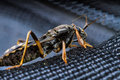 Assassin Bug Stock Photography - 30361872