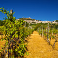 Vineyard Bellow Rocca Maggiore In Umbria, Assisi During A Hot Su Stock Photography - 30389682
