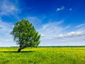 Spring Summer Green Field Scenery Lanscape With Single Tree Royalty Free Stock Image - 30391036