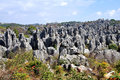 Stone Forest Royalty Free Stock Images - 30391379