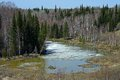 The Spring Flood In The Siberian Taiga Stock Images - 30400684