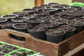 Seeds In Plant Pots In Gardening Shed Window. Stock Photography - 30434972