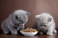 Bowl Of Cat Food And Two Kittens Stock Photo - 30440350