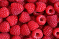 Raspberries Royalty Free Stock Photos - 30460038