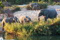 Herd Of Elephant Play Next To River Stock Photos - 30472653