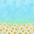 Field Of Daisies Stock Images - 30480644