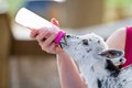 Bottle Feeding Goat Kid Royalty Free Stock Photos - 30489728