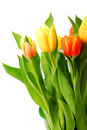 Tulips Royalty Free Stock Images - 3050149