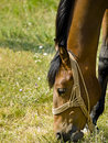 Horse Royalty Free Stock Images - 3052319