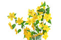 Marsh Marigold  Yellow Wildflowers In Vase Isolated On White Bac Stock Photography - 30532662