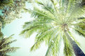 Canopy And Fronds Of A Palm Tree Stock Photo - 30547820