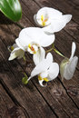 Spray Of White Phalaenopsis Orchids Royalty Free Stock Photo - 30593205