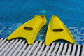 Yellow Flippers On Coast Of Sw Stock Photo - 3060320