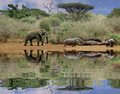Elephant And Hippos Royalty Free Stock Image - 3060746
