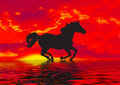 Red Horse Silhouette  Royalty Free Stock Images - 3069299