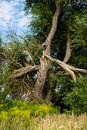 Tree After Lightning Strikes Royalty Free Stock Image - 30602566