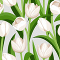 Vector Seamless Background With White Tulips. Stock Image - 30644411