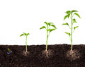Plant Growing Royalty Free Stock Images - 30645559