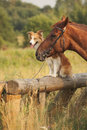 Red Border Collie Dog And Horse Stock Photo - 30654400