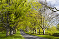 Avenue Of Beech Trees Stock Images - 30683244