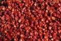 Dried Chilies Stock Image - 30705101
