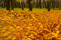 Yellow Maple Leaves On Pathway Through Autumn Forest Stock Photos - 30717813