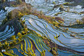 Rice Terraces Of Yuanyang Stock Image - 30743031
