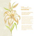 Lily Flower Background. Vector Illustration Stock Image - 30744741