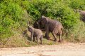 Wild Herd Of Elephants Come To Drink In Africa In National Kruger Park In UAR Royalty Free Stock Images - 30745759