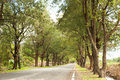 A Road With Trees Stock Image - 30757411