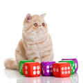 Exotic Shorthair Cat. Cute Tabby Stock Images - 30760254