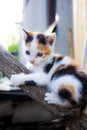 Little Cat Climbing On A Tree Royalty Free Stock Photo - 30862705