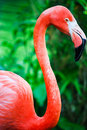Pink Flamingo Royalty Free Stock Images - 30866349