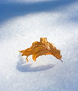 Brown Leaf Fell To An Early Snow Stock Photos - 30883383