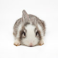 Cute Little Bunny Stock Images - 30888954