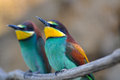 Bee-eater Royalty Free Stock Photo - 30916155