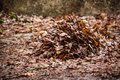 Dead Leaves Pile Stock Image - 30952931