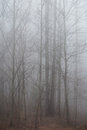 Foggy Forest Royalty Free Stock Photo - 30953975