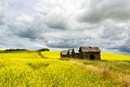 Canola Field In Sumer With Four Old Granaries Royalty Free Stock Photos - 30974538