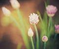 Exotic Flower Royalty Free Stock Image - 30994836