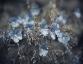 Blue Spring Flowers Stock Photography - 30994862