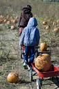 Haulin Pumpkins Royalty Free Stock Photos - 318118